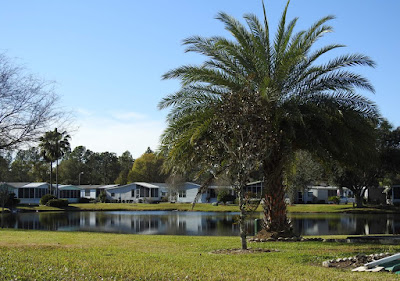 Another pond and palm tree in Cypress Lakes Esates, Lakeland, Florida.