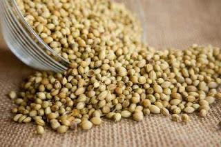 ¡Mejora tu digestión! gracias a las semillas de cilantro