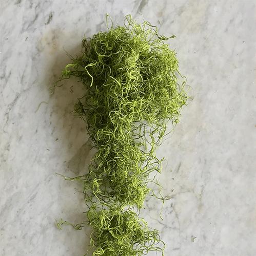 Tanaman pengusir lembap: Spanish Moss