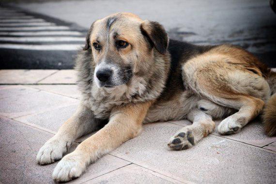 Σκύλος ιδιοκτήτρια