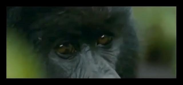 Extrait du film Nous resterons sur Terre. Extrait clip non officiel Damien Saez La Fin Des Mondes  Fat Blach Sheep