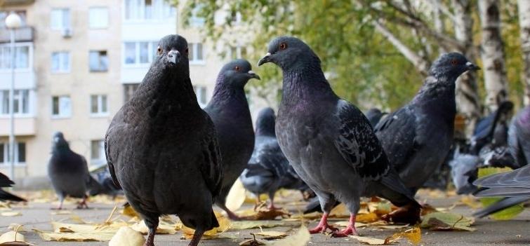 Control de plagas de aves en Valladolid
