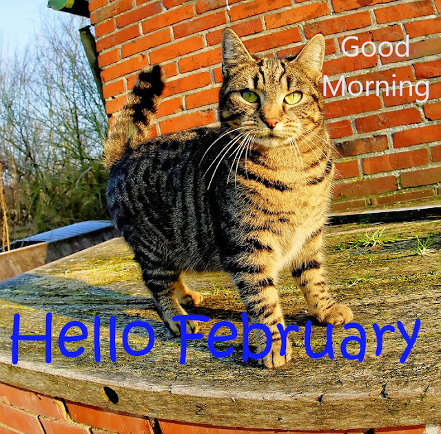 Good Morning Hello February.