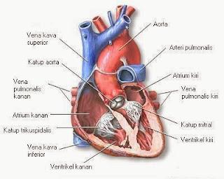 Beberapa Jenis Penyakit Jantung yang Berbahaya