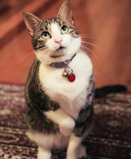 gambar kucing gemes - kanalmu