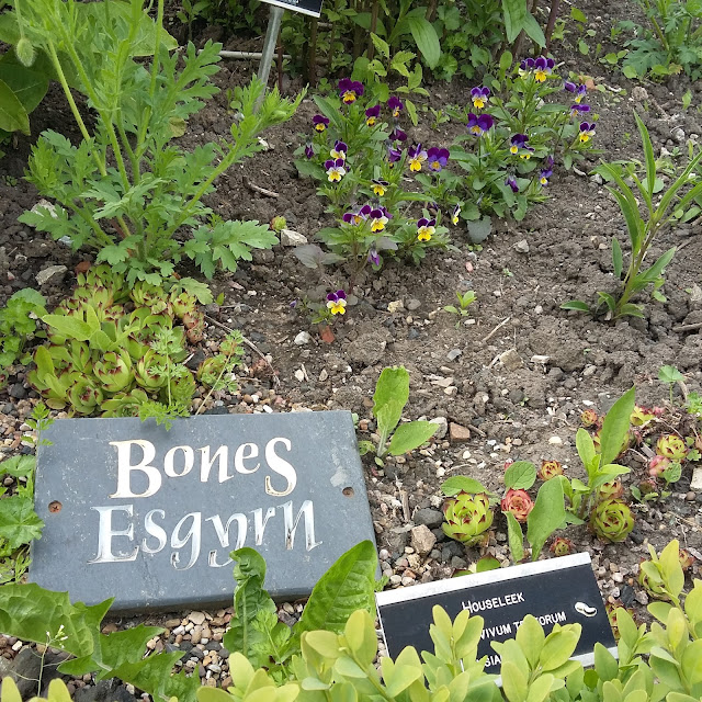 Plants for Bones, Physics Garden, Cowbridge