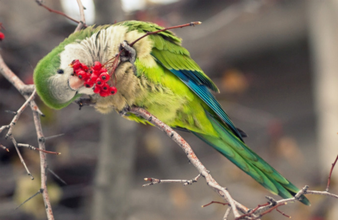 Foods That Quaker Parrots Like To Eat