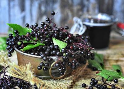 gambar buah elderberry