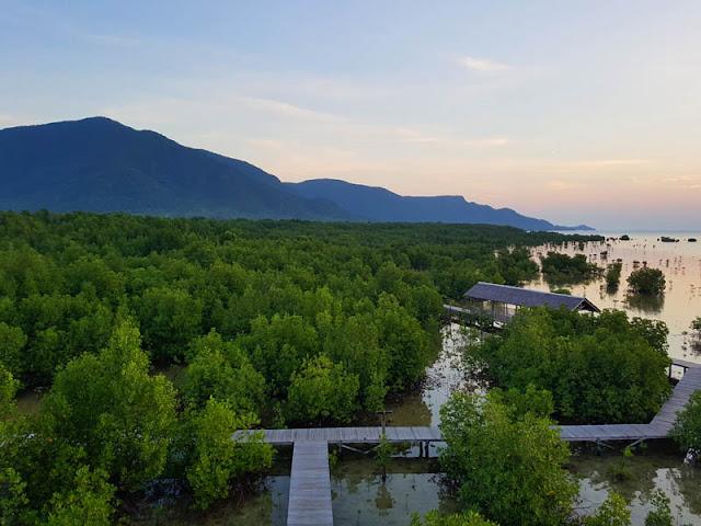 Hutang mangrove karimun jawa