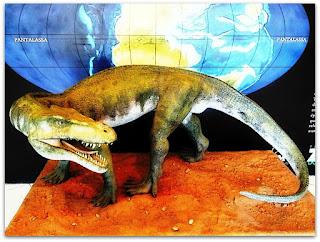 Decuriasuchus quartacolonia - Museu de Ciências Naturais da Fundação Zoobotânica, Jardim Botânico de Porto Alegre
