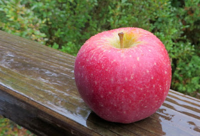 attractive red apple
