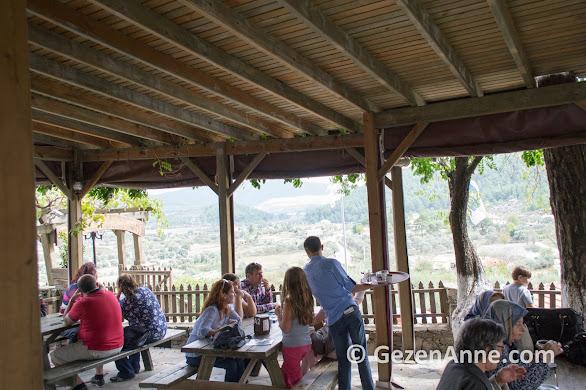Belen kahvesinin ortamı, Gevenes köyü Muğla