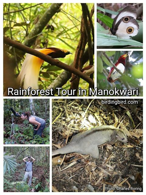 Rainforest tour in Manokwari regency of West Papua
