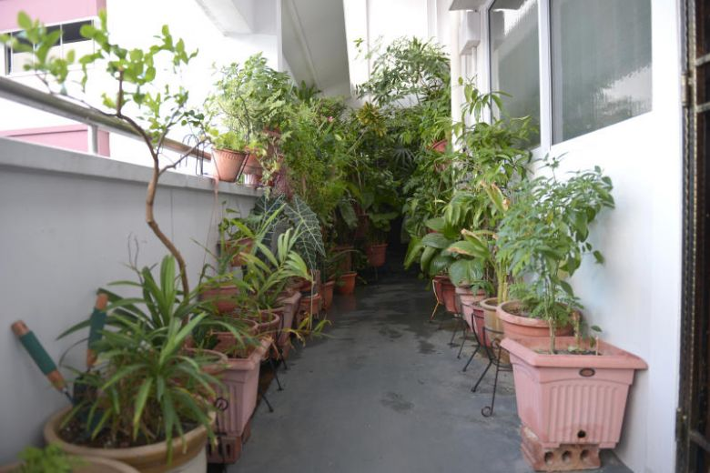 The plants have been like this for the past eight to nine years