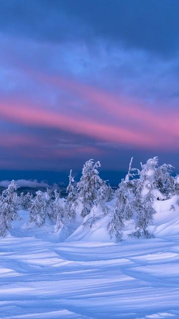 Winter Wallpaper, Landscape, Snow, Trees, Dusk