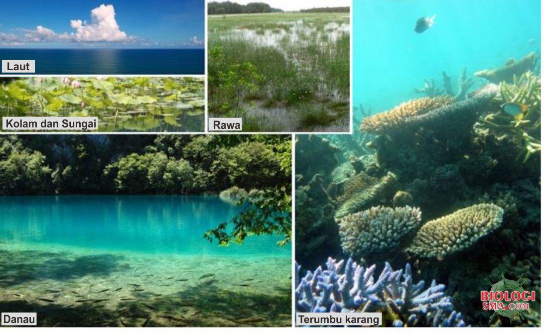 Tingkat Keanekaragaman Hayati - Dunia Biologi