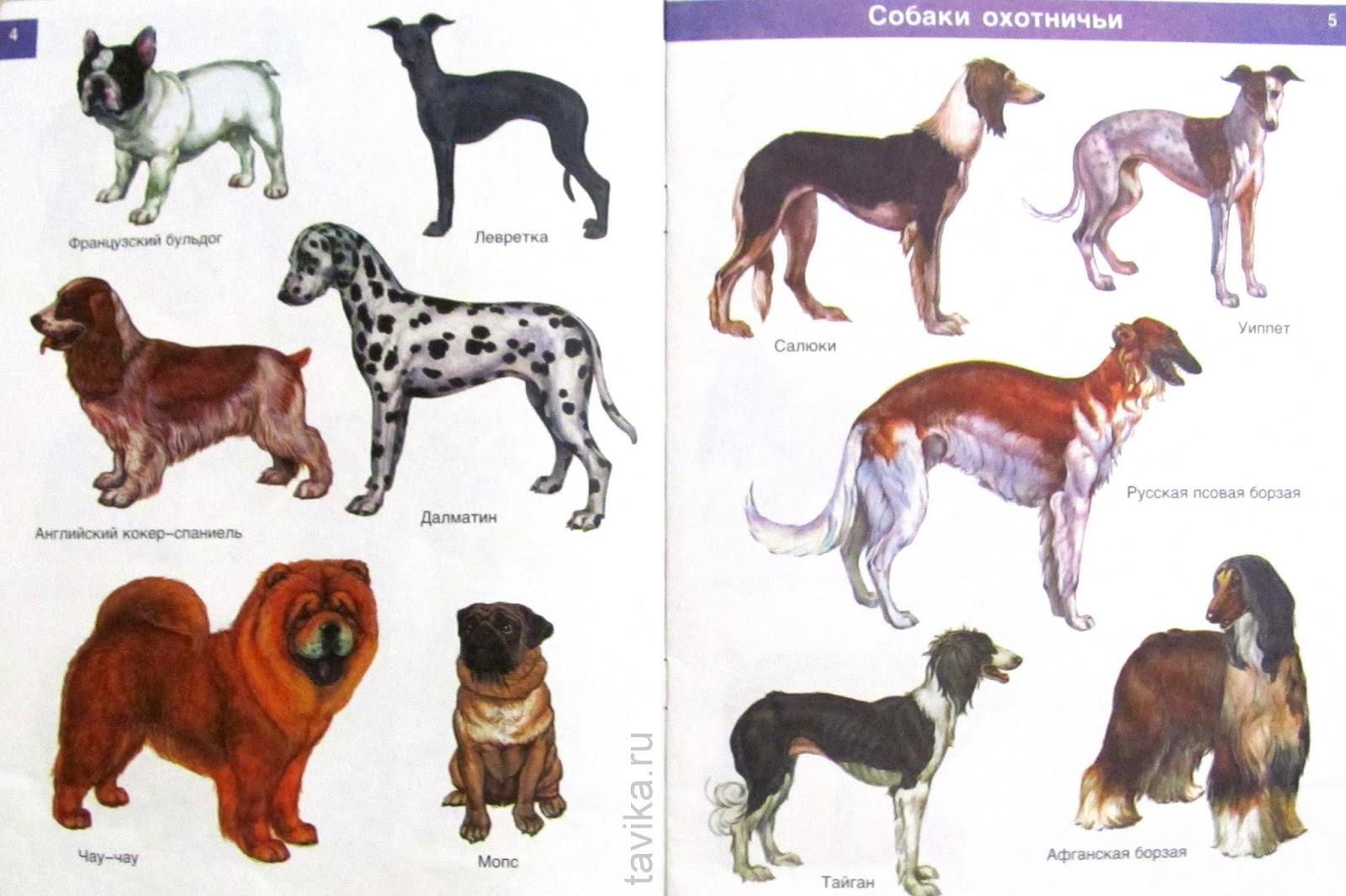 презентация известных пород собак