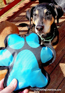 Teutul thinks the #pawprint #dogtoy  found in our #SurpriseMyPet #petbox rocks! #LapdogCreations ©LapdogCreations