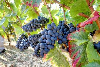 Ailleurs : Château de Marsannay, dégustation au domaine sur la route des Grands Crus du vignoble de Bourgogne