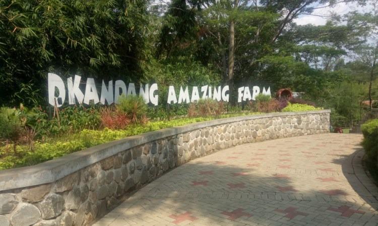 D'Kandang Amazing Farm, Destinasi Wisata Petualangan & Edukasi di Depok