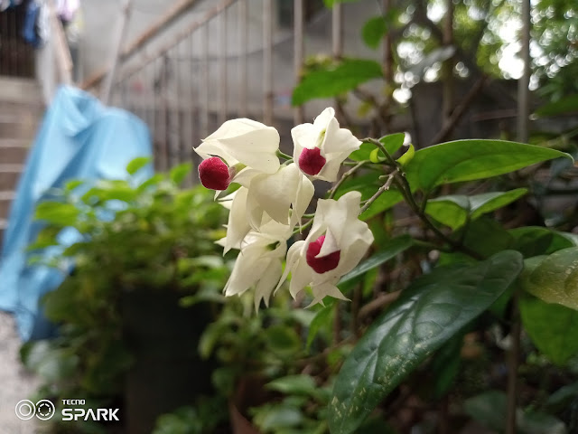 Tecno Spark 6 Go Camera Sample