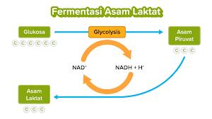 Asam proses fermentasi