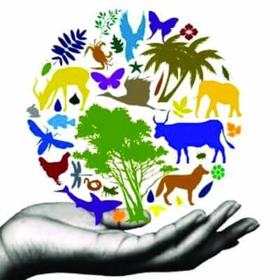 17 دولة شديدة التنوع البيولوجي في العالم