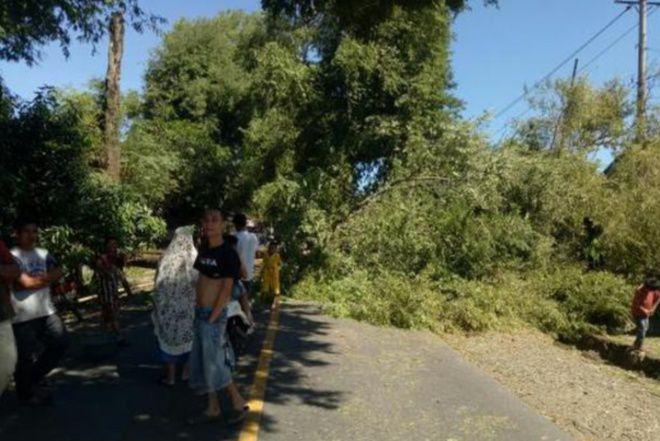 Pohon Tumbang di Bengo, Jalan Poros Bone-Makassar Macet 2 Km