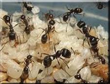 ✅¿cómo-trabajan- las-hormigas-en-equipo?