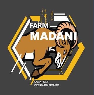 Madani Farm Jogja Jual Bibit Anakan Kambing Domba Qurban