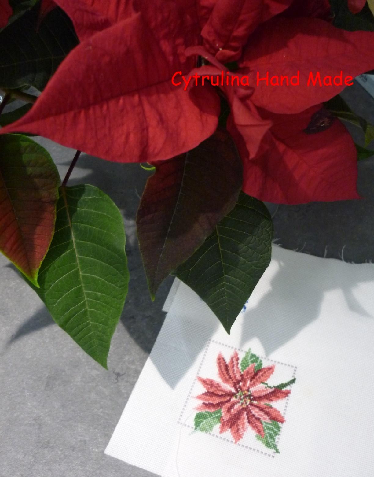 P1150682 - Kwiatowy rok - poinsecja ipodsumowanie zabawy