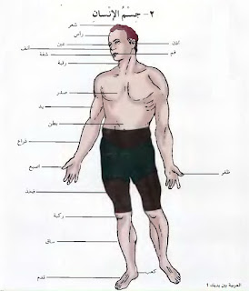 bahasa arab anggota tubuh/badan manusia
