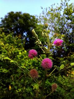 Bander ki Rakhi Flowers