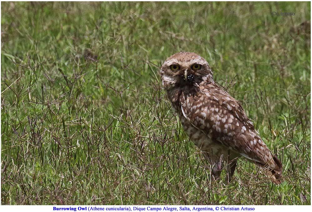 Christian Artuso: Birds, Wildlife - photo#38