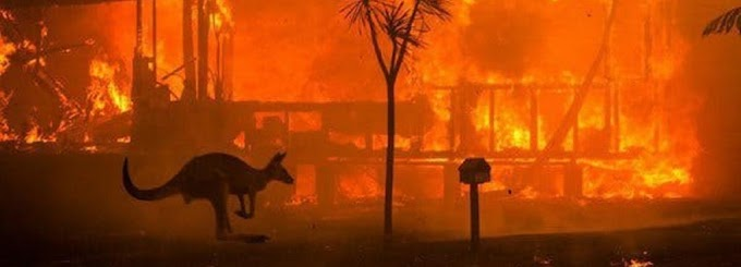 Australia Bushfire: Half billion Animals Believed Dead