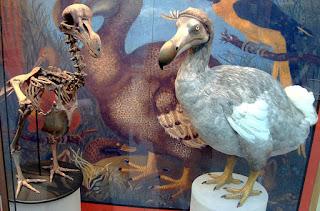 burung dodo terakhir di Museum of Natural History