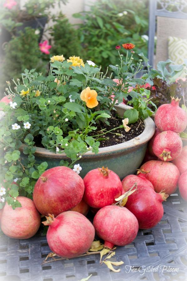 Pomegranate Harvest- www.gildedbloom.com #gardening #pomegranates