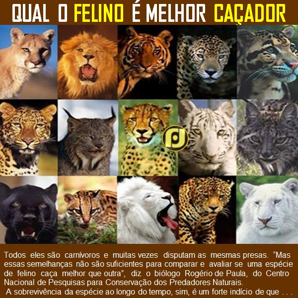 Almanaque de Curiosidades - cover