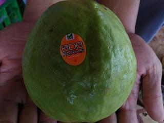 Pearl Guava