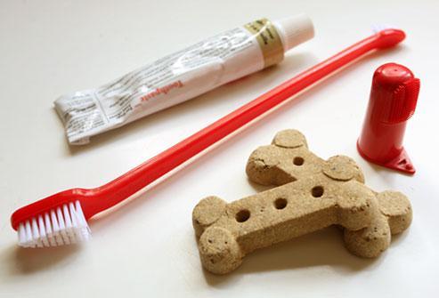 Chăm Sóc Sức Khỏe Răng Miệng Cho Chó
