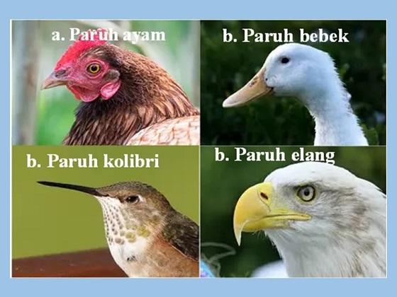 bentuk paruh berbeda berdasarkan jenis makanan dan tempat tinggalnya pada unggas sebagai adaptasi morfologi