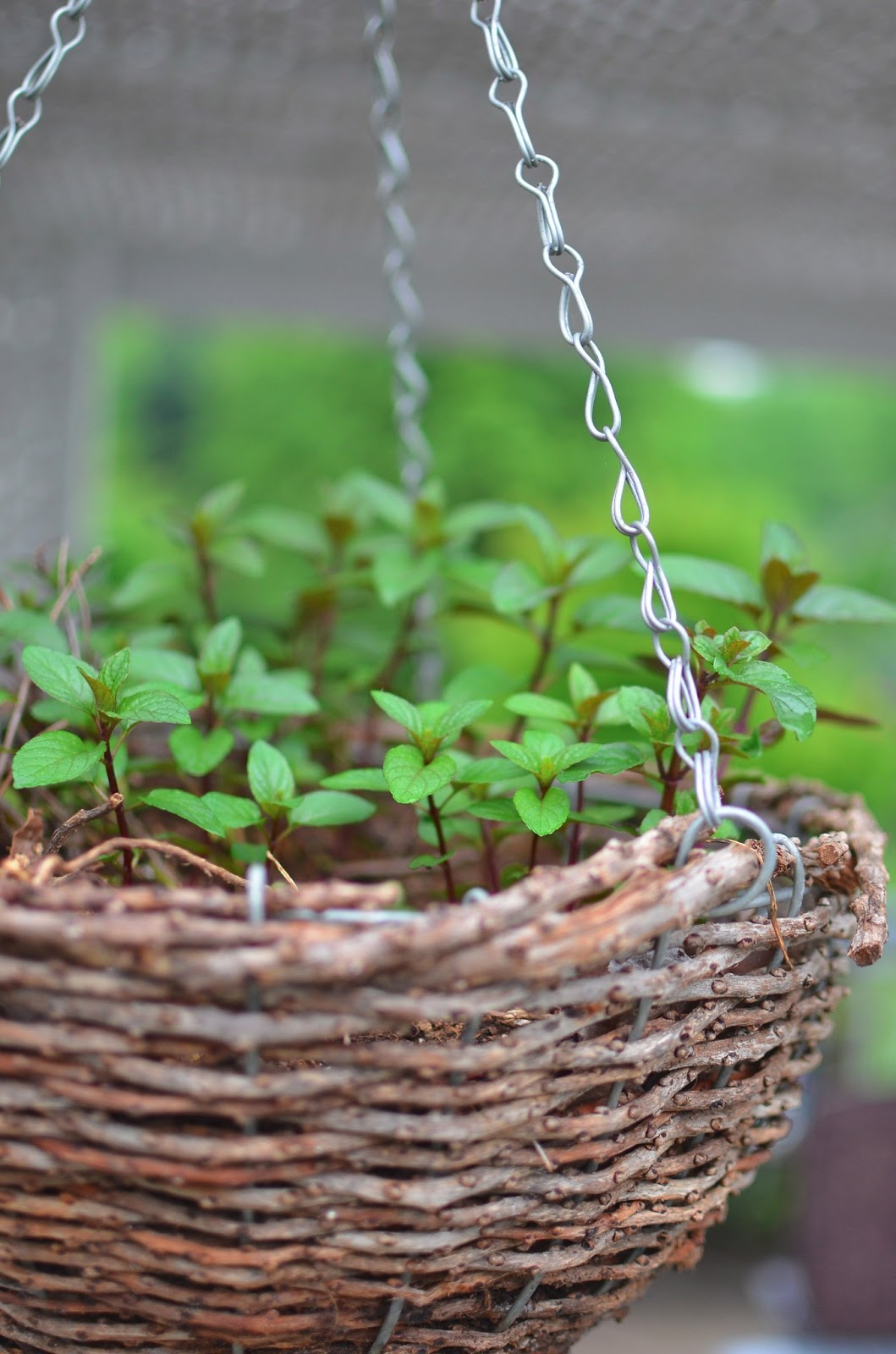 8 Easy Plants YOU Can Grow on Any Sized Deck or Patio
