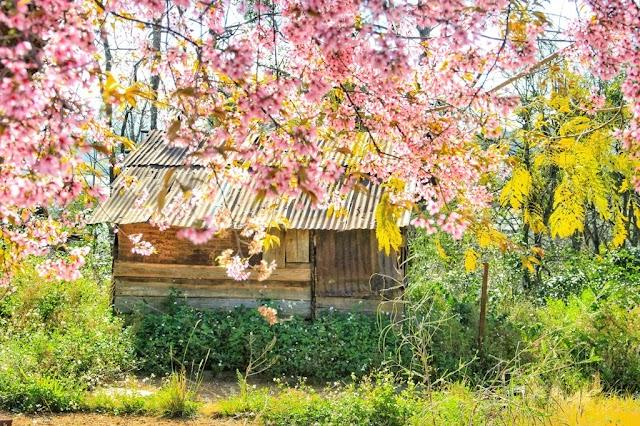 Chiêm ngưỡng vẻ đẹp tuyệt trần của vùng ngoại ô Đà Lạt
