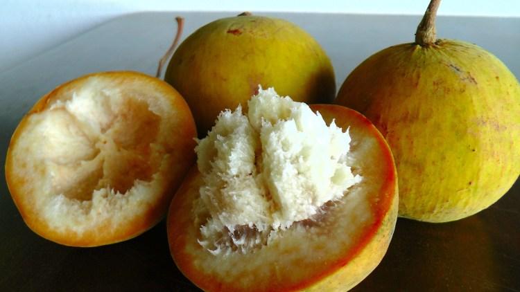 cotton fruit, santol