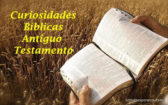 Biblia abierta en campo de espiga