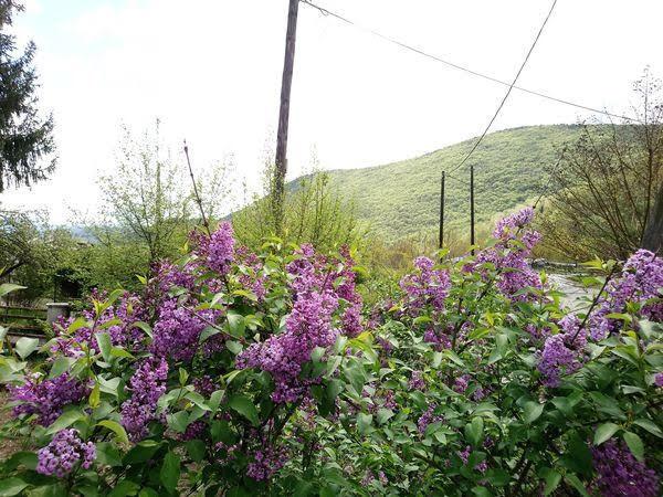 Πασχαλιά: Το χωριό με τις πασχαλιές που έχει την τιμητική του