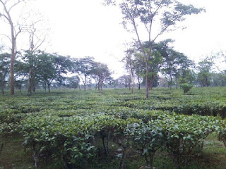Dagapur Tea Estate
