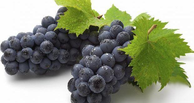 البدء باستلام محصول العنب العصيري الأسود من المزارعين في السويداء