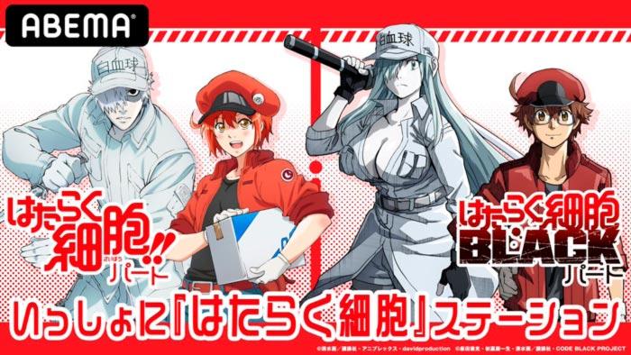 Cells at Work! (Harataku Saibou) & Cells at Work! Code Black (Hataraku Saibou BLACK) anime
