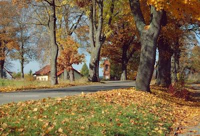 Sząbruk, Tomaszkowo | Jesiennie